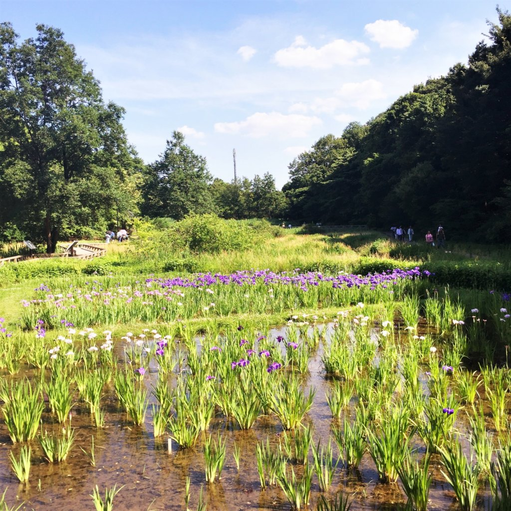 東京都唯一の都立植物公園「神代植物公園(じんだいしょくぶつこうえん」